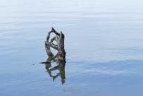 Beaver Lake Bird Sanctuary 01-09-2020 13.48.15-sm
