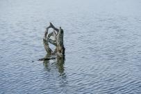 Beaver Lake Bird Sanctuary 01-09-2020 14.02.46-sm