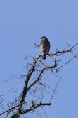 Hawk 01-09-2020 10.16.25-sm
