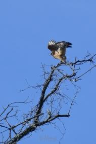 Hawk 01-09-2020 10.16.32-sm