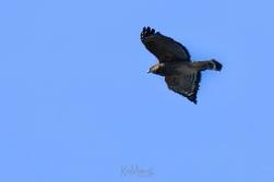 Hawk 01-09-2020 10.16.34-sm