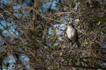 Mockingbird 01-09-2020 10.19.59-sm