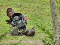 Turkey 03-18-2020 09.44.29-sm